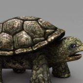 Old Sea Turtle