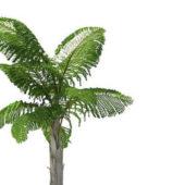 Caryota Gigas Green Tree