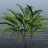 Cat Palm Tree Plant