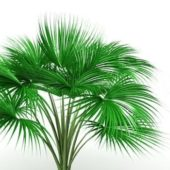 Green Cat Palm Tree