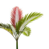 Green Tree Chambeyronia Macrocarpa