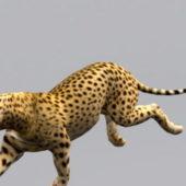 Cheetah Animal Animated Rigged