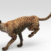 Africa Cheetah Running Animated Rigged
