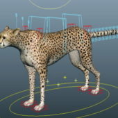 Animal Cheetah Running Rigged