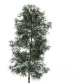 Chenmou Elm Green Tree