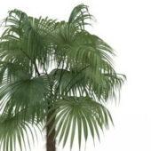Nature China Fan Palm Tree