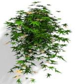 Wall Ivy Vines Plant