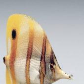 Aquarium Colorful Fish