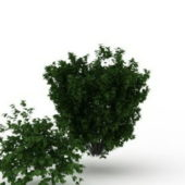 Common Green Bushes Shrubs