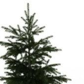 Nature Green Conifer Fir Tree
