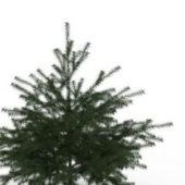 Green Conifer Pine Tree