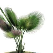 Copernicia Baileyana Green Tree