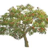 Coral Nature Tree