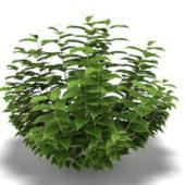 Cornus Plant Tree