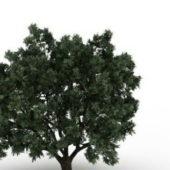 Crack Willow Green Tree