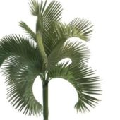 Green Cuban Royal Palm Tree
