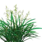 Green Cymbidium Plants