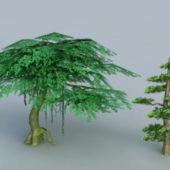 Cypress Banyan Tree