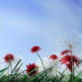 Dandelion Flowers Plant