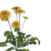 Nature Green Dandelion Plant Flowers
