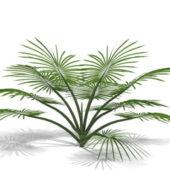 Garden Decorative Palm Tree