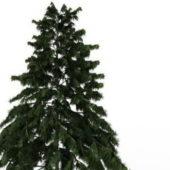 Deodar Cedar Green Tree