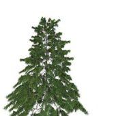 European Pine Tree