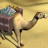 Desert Cargo Camel