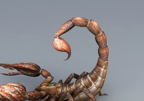 Desert Scorpion Animal