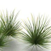 Garden Desert Grass