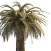Green Desert Palm Tree