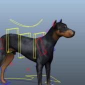Doberman Dog Animal Rigged