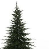 Douglas Fir Nature Tree