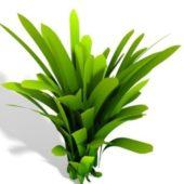 Tree Dracaena Plant