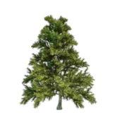 Nature Dragon Spruce Tree