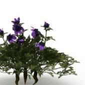 Green Dwarf Bushes Flower