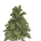 Nature Green Dwarf Coniferous Tree