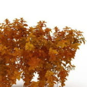 Autumn Dwarf Fothergilla