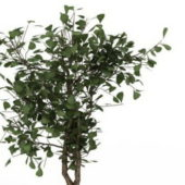 Nature Dwarf Tree V1