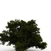Nature Dwarf Tree