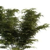 Dwarf Green Trees