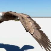 Wild Animal Eagle Animation Rigged