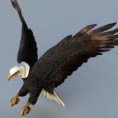 Eagle Bird Attacking Rigged