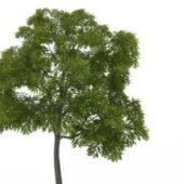 Nature Plant Eastern Black Walnut Tree
