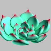 Flower Echeveria Chihuahuaensis Plant
