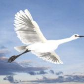 Egret Bird Animal