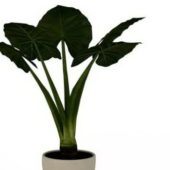 Green Elephant Ear Plant