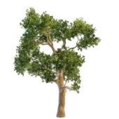 Nature Eucalyptus Gum Tree