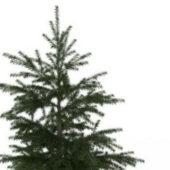 European Wild Larch Tree