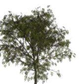 Nature Mountain Ash Tree